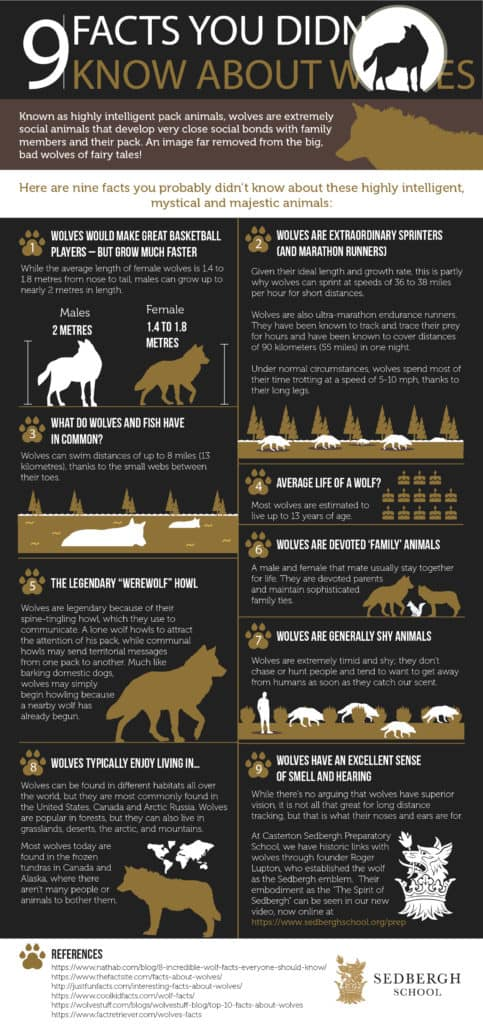 9 Facts about Wolves Infographic
